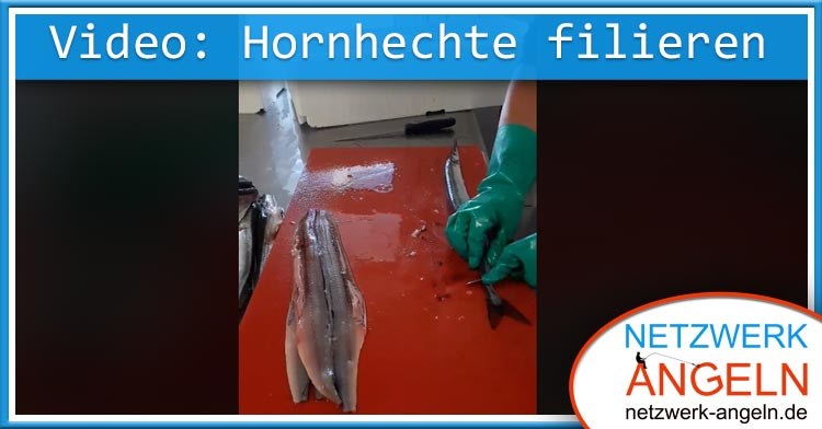 hornhechtvideo