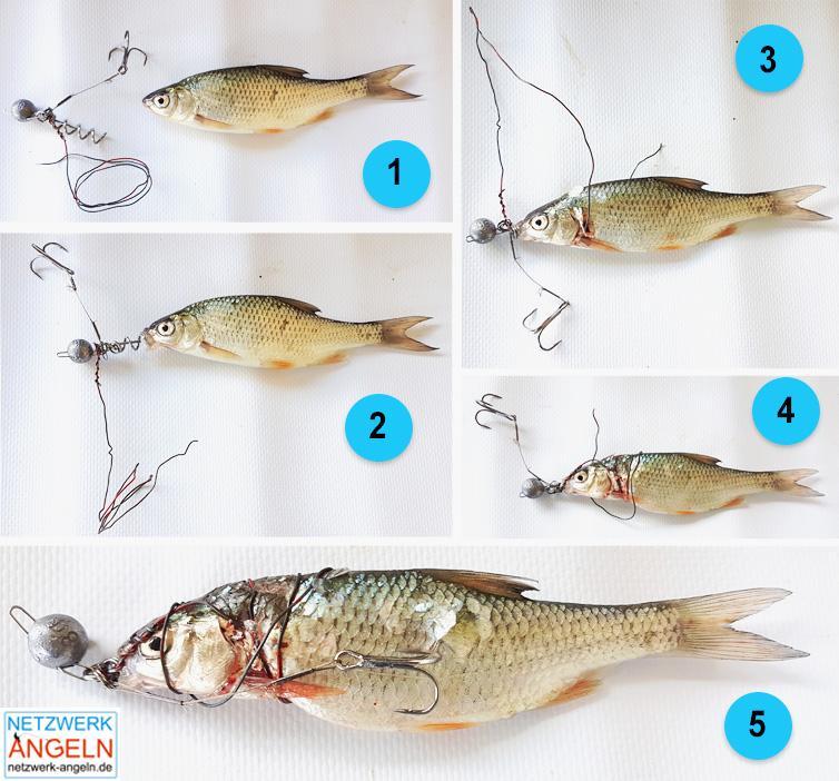 Drachkovitch Pike System Angeln Ködersystem für Köderfische