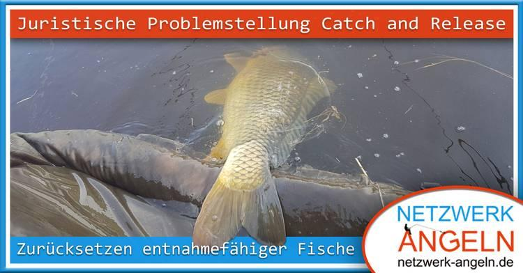 catchandrelease raimund teaser